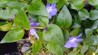 庭の花白 (2)