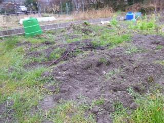 じゃが芋を植えた畝